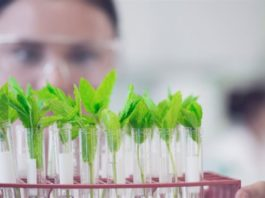 MSc Biological Sciences Project-JRF Position @ IISER Bhopal